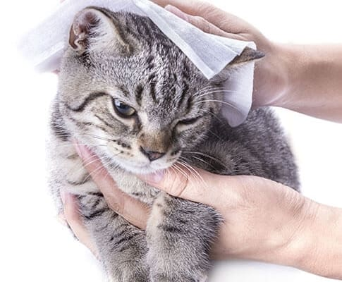 Droid wetwipes pets 485x400 - Wet Wipes Material_Spunlace Nonwoven